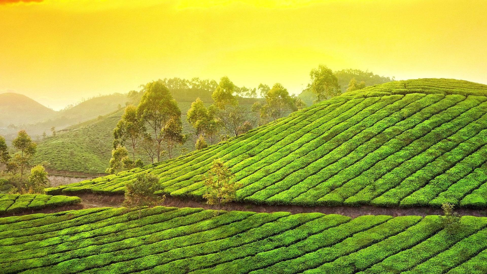 Mystical Kerala